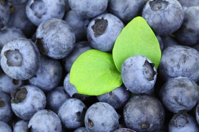 Fenomen soku z owoców acai